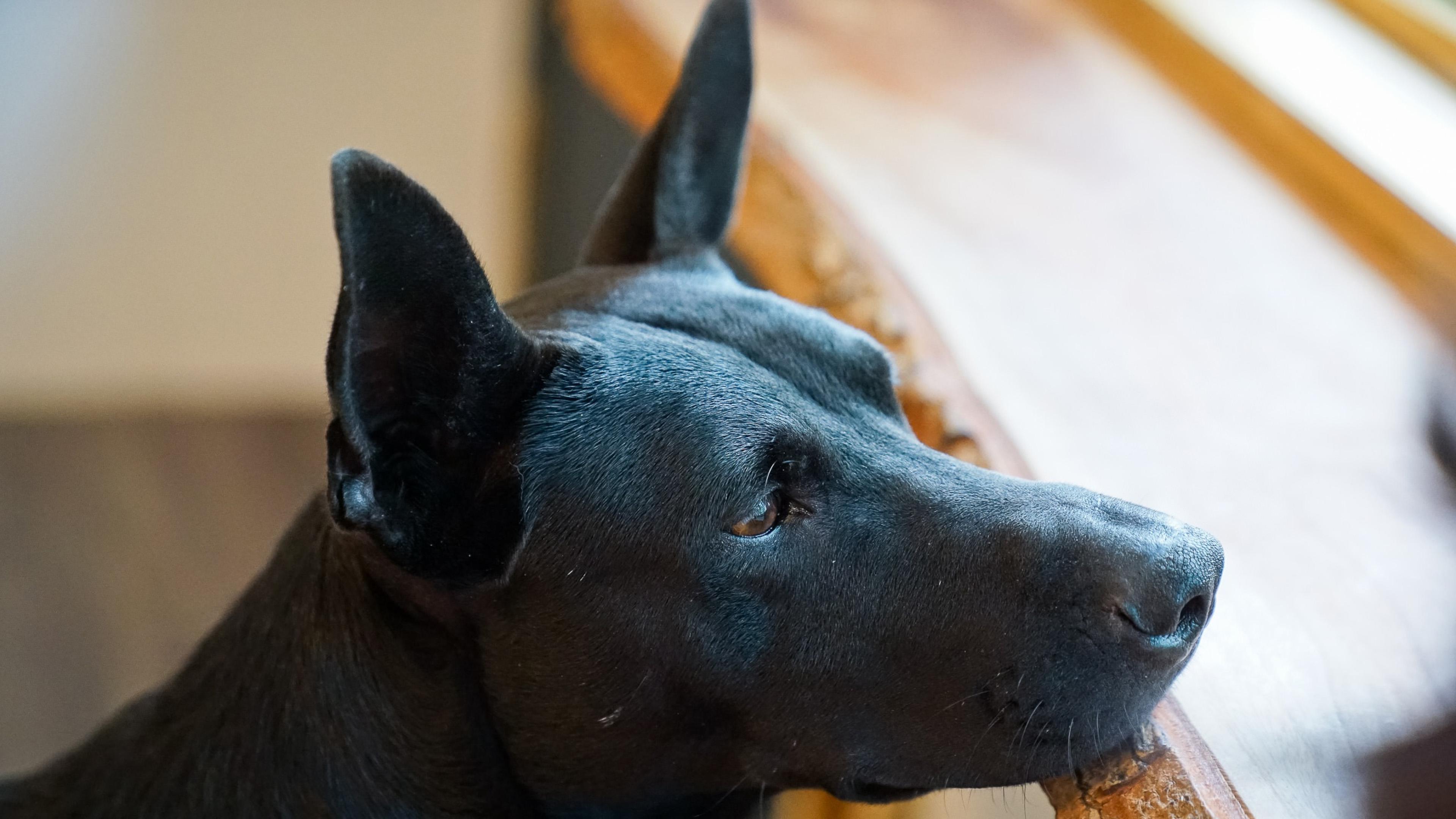 Собаки и щенки - черная собака