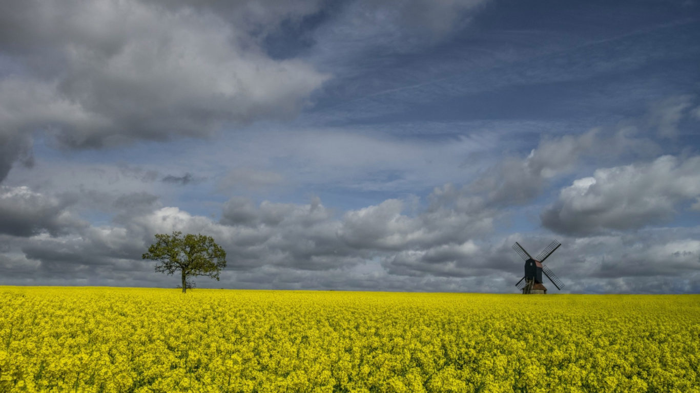 лето, цветущее поле летом, природа, поляна, цветы, обои hd