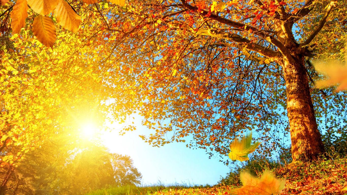 золотая осень, природа, листья, деревья, обои hd