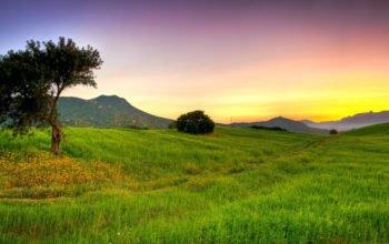 лето, поле, трава, природа hd