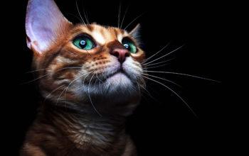 Кошки - Красивый кот с зелеными глазами