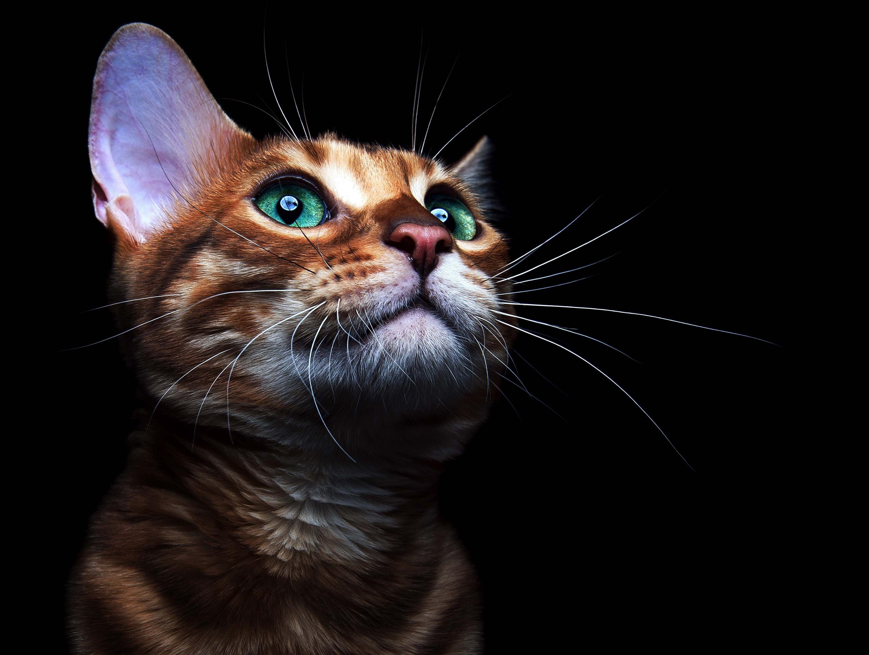 Кошки, коты, cats, зеленые глаза, hd обои