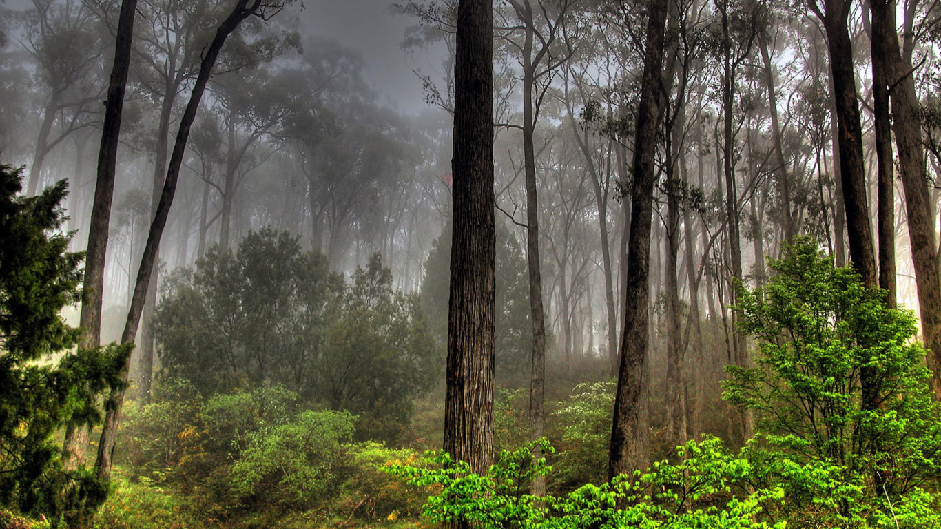 Красивый пейзаж леса