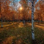 Березовый парк осенью