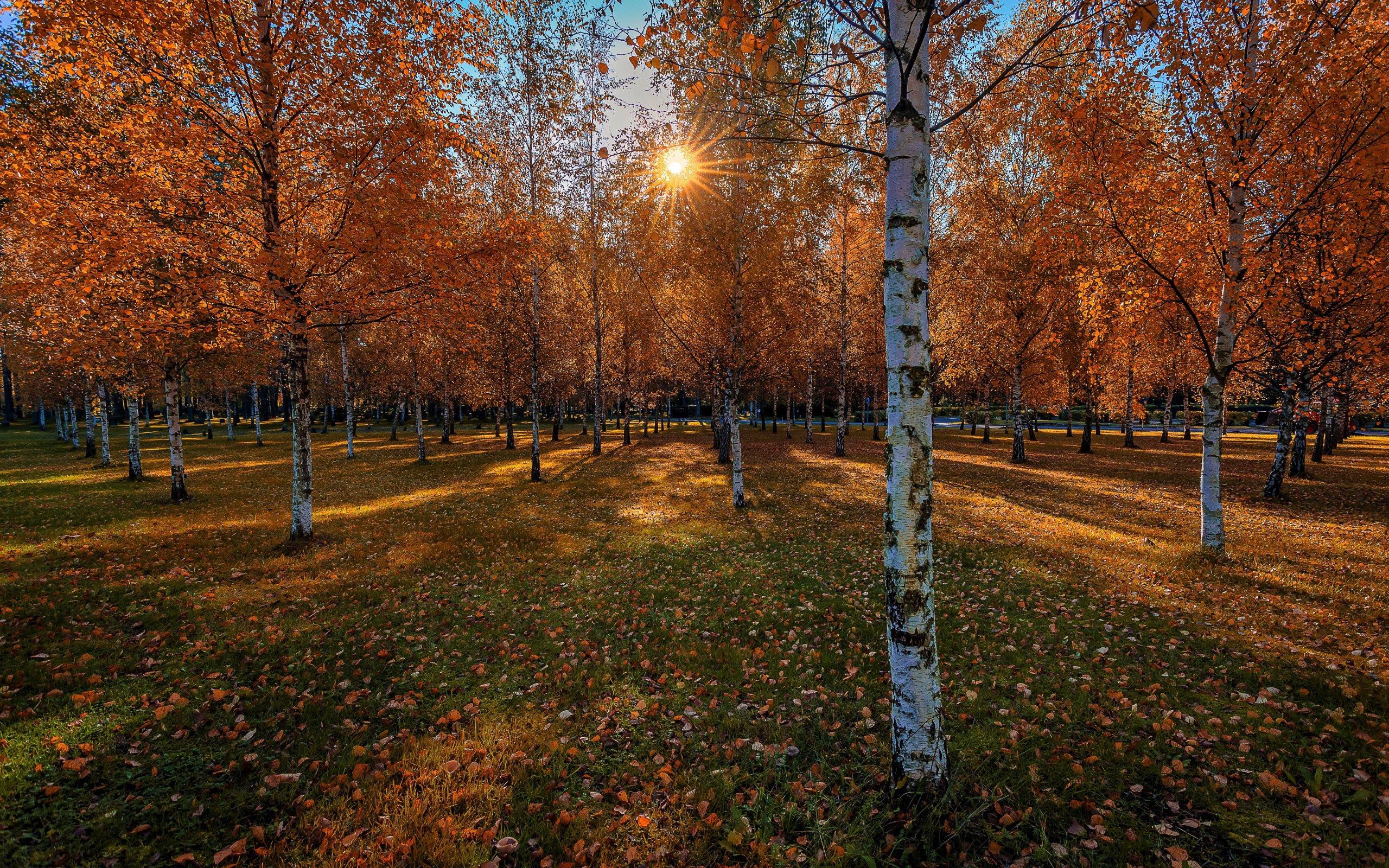 осень - Березовый парк осенью