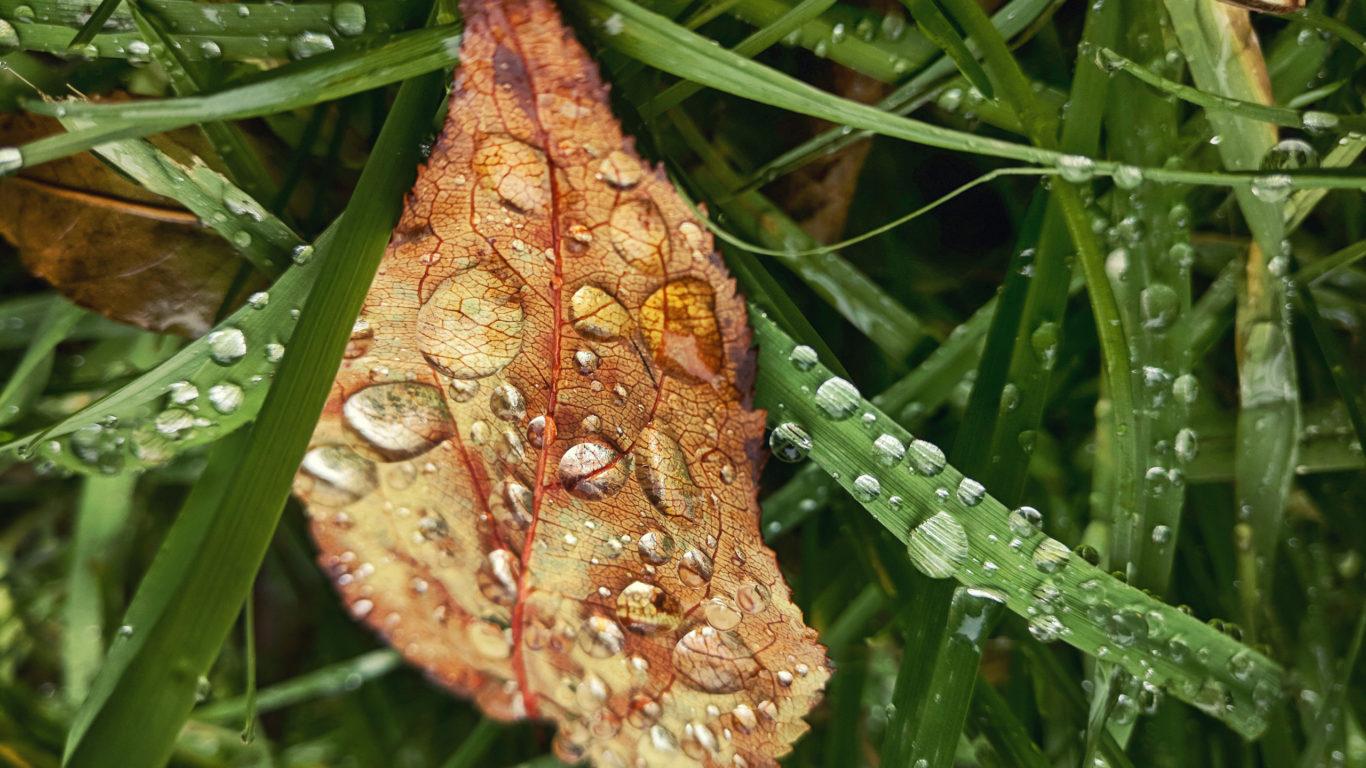 Осень - Осенний лист в каплях дождя