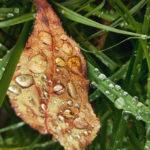 Осенний лист в каплях дождя