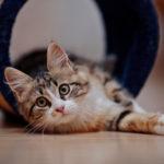 Серый кот в полоску, кошки