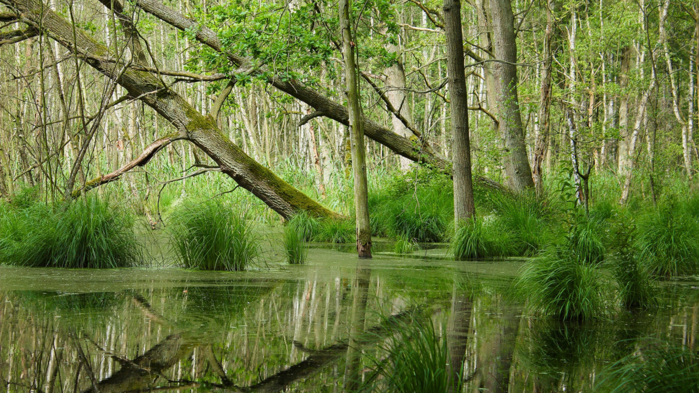 болото фото hd