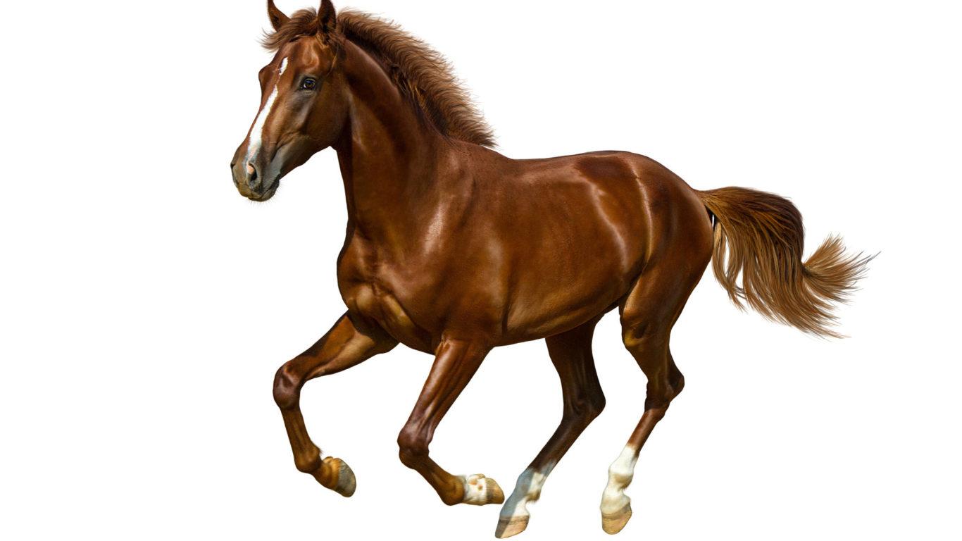 картинка лошадь, коричневый конь, hd обои