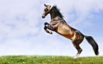 Прыжок красивой лошади на зеленой траве