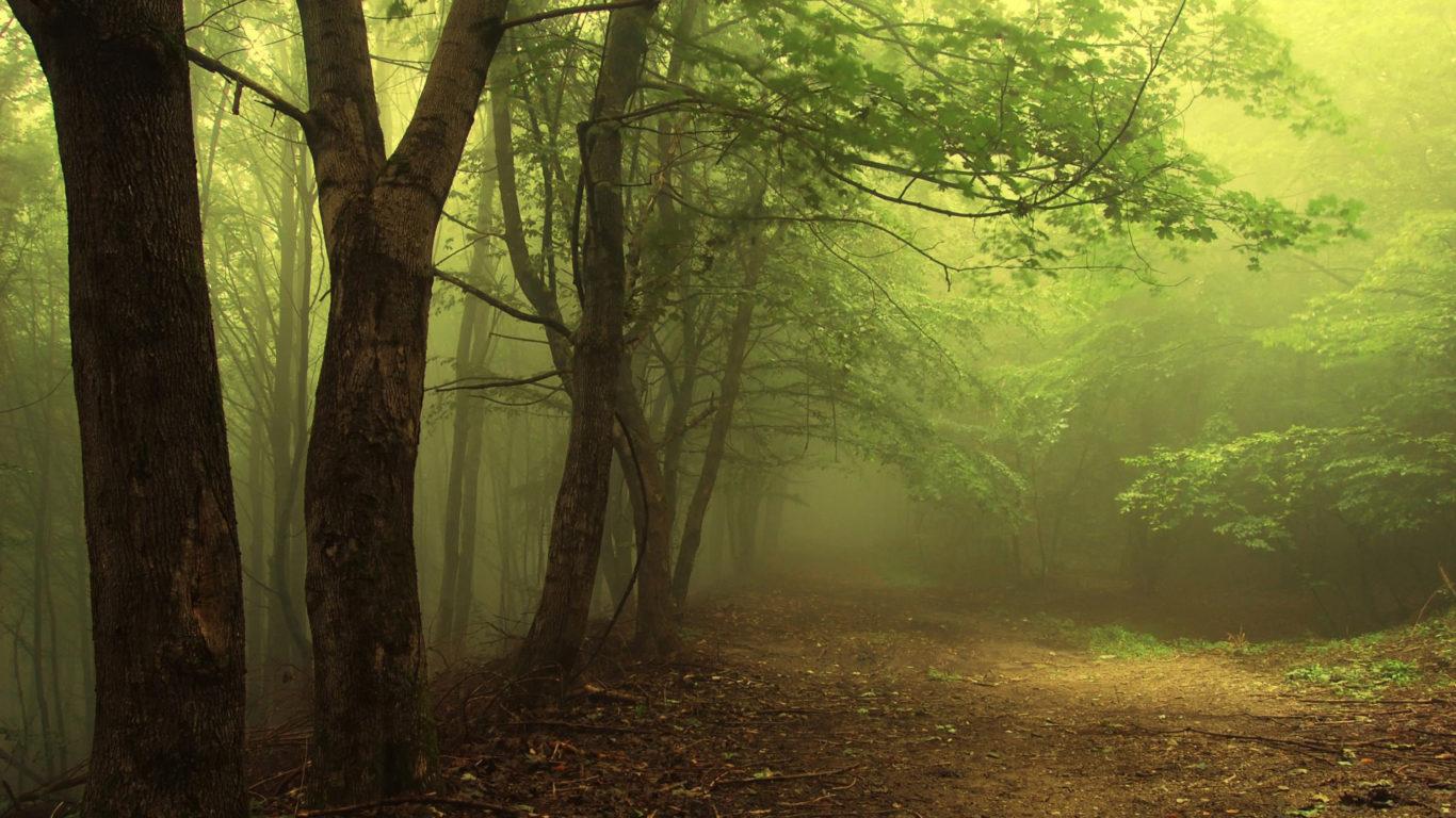 Зеленый туман в лесу