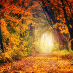 Арка из деревьев осенью
