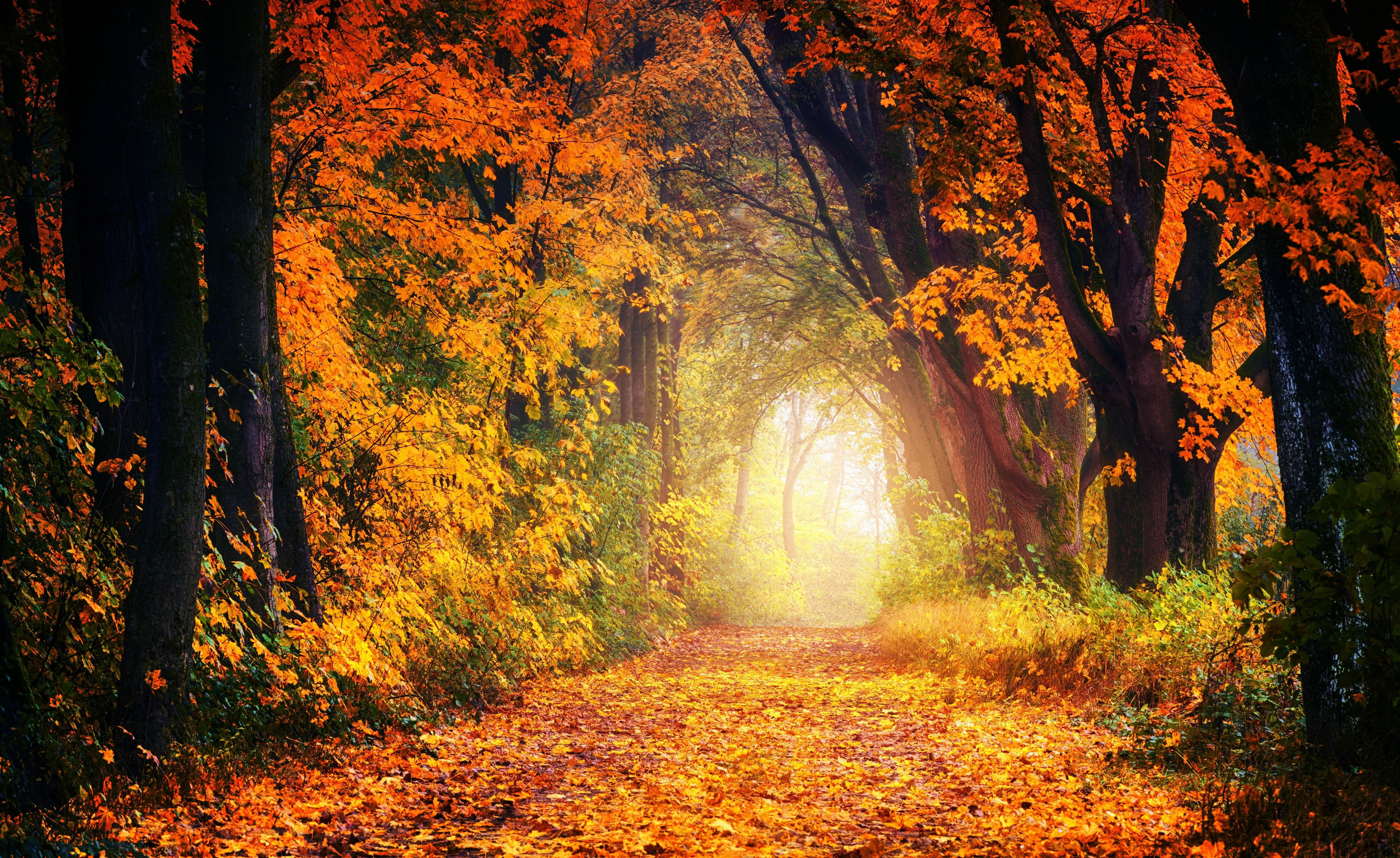 осень, деревья, арка, туннель, 5k