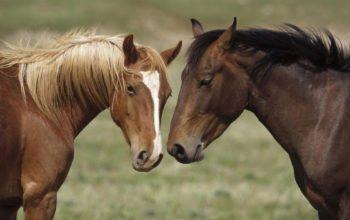 лошади, кони, horses, обои