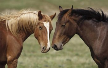 лошади, кони, horses, обои hd