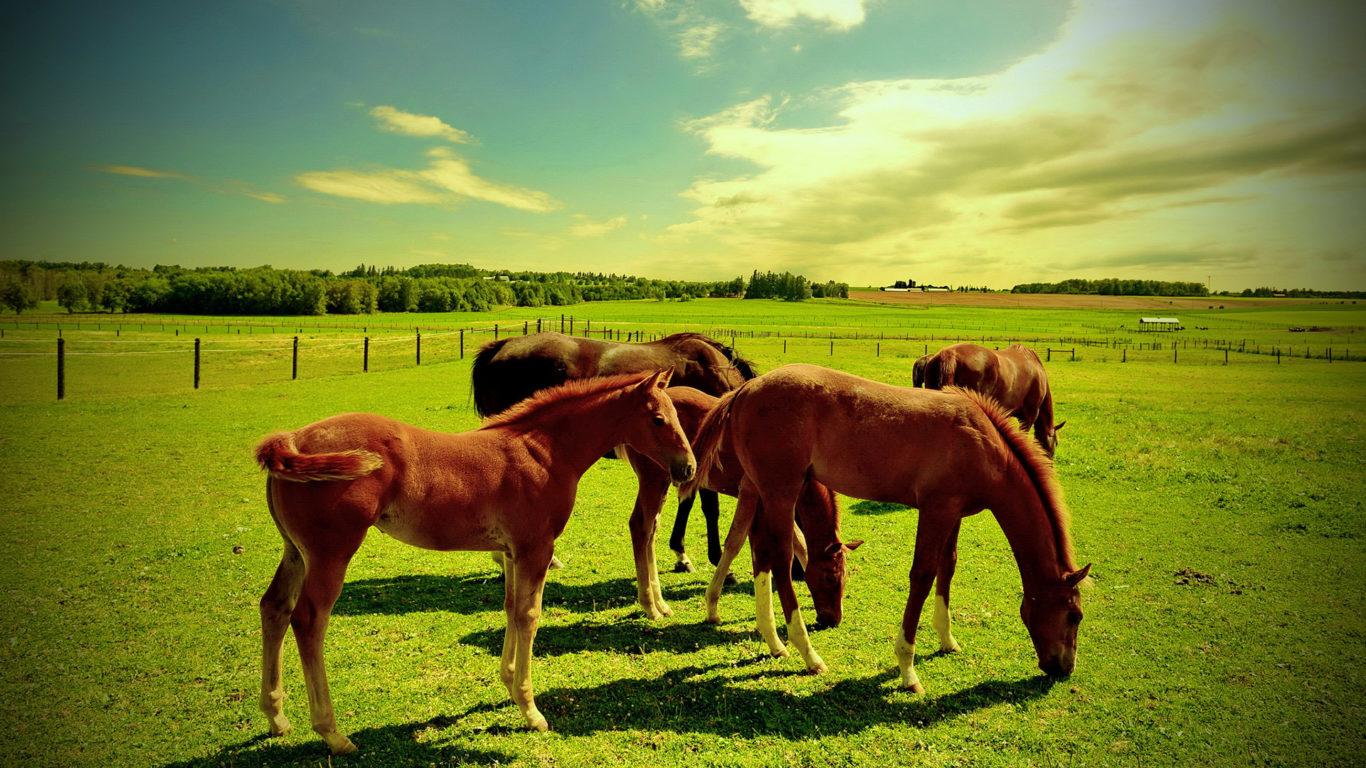 лошади, кони, лужайка, трава, hd обои