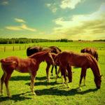 Лошади пасутся на лужайке