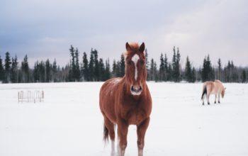 лошадь, зима, животные, Full HD