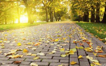 Красивая осень в парке