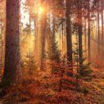 Лес осенью 4k