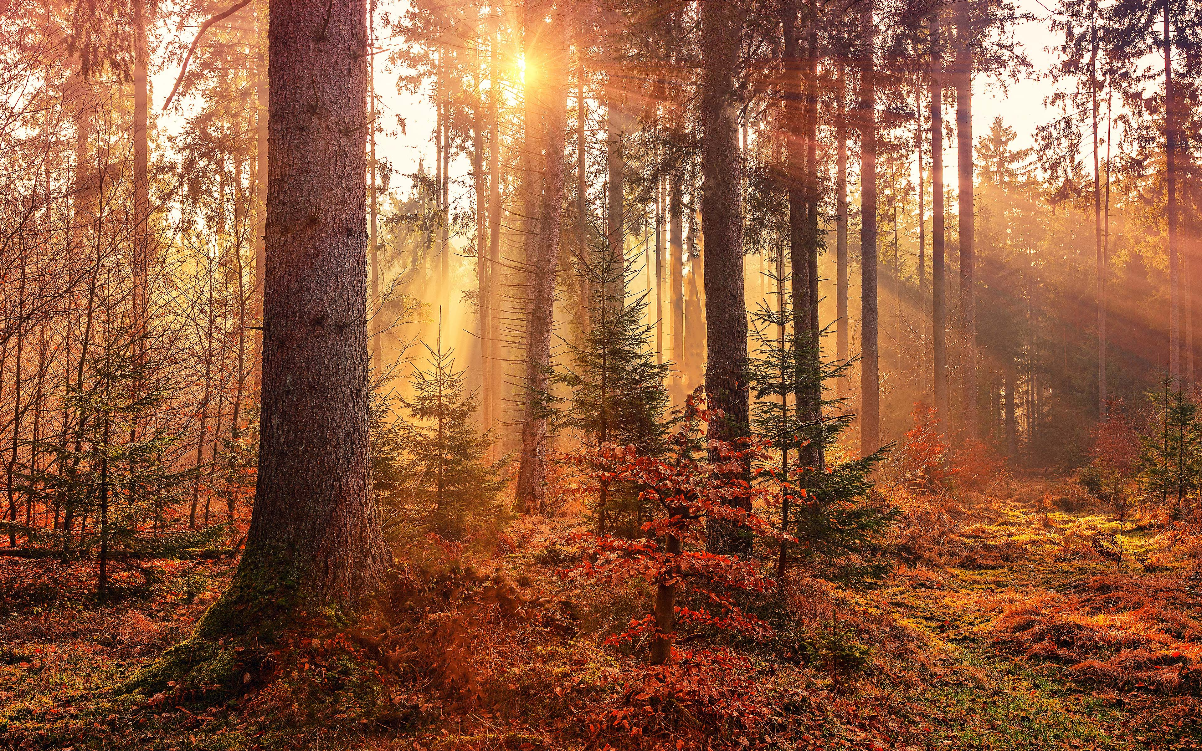 осень, природа, лес, 4k ultra hd обои