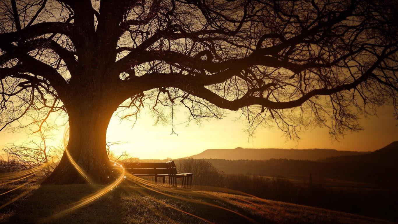 закат, пейзаж, дерево, природа, hd обои