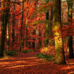 Красные деревья в лесу