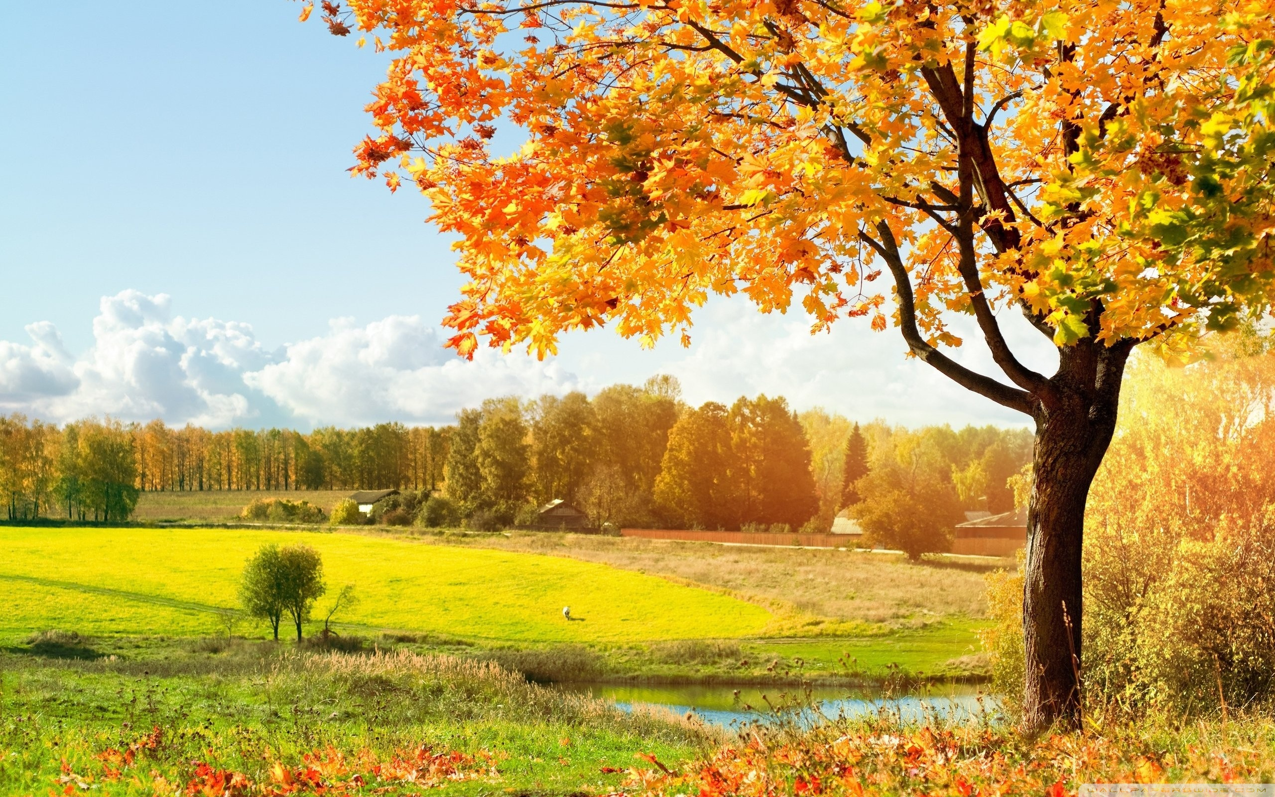 Осень, времена года, природа, поле, дерево, HD