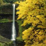 Небольшой водопад в лесу