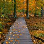 Деревянная дорожка в осеннем лесу