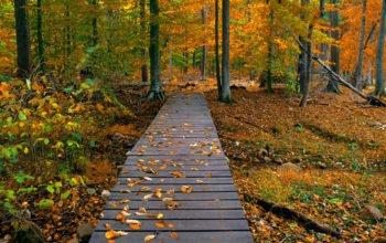 Осень, природа, лес, hd обои