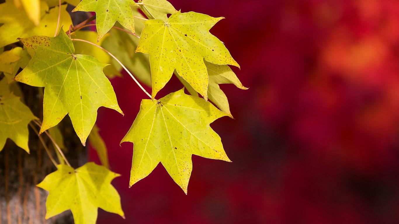 Осень обои, Желтые листья осенью