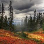 Туман в лесу осенью
