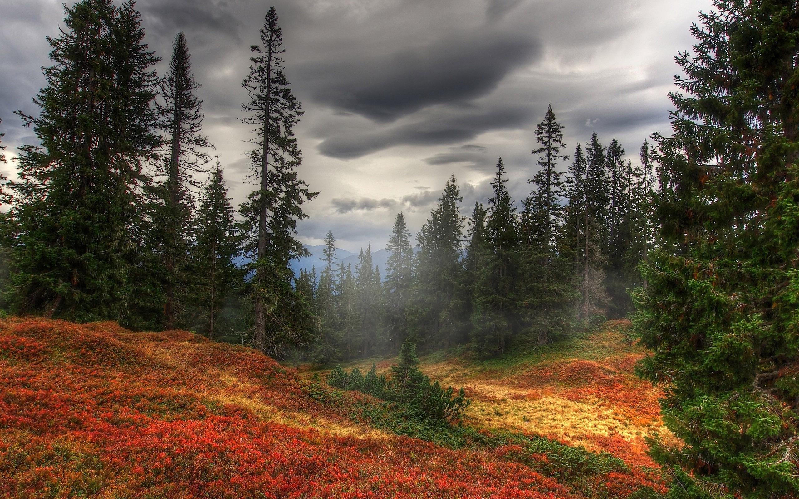 осень, туман, лес, природа, широкоформатные обои