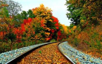 Осень - железная дорога в лесу осенью