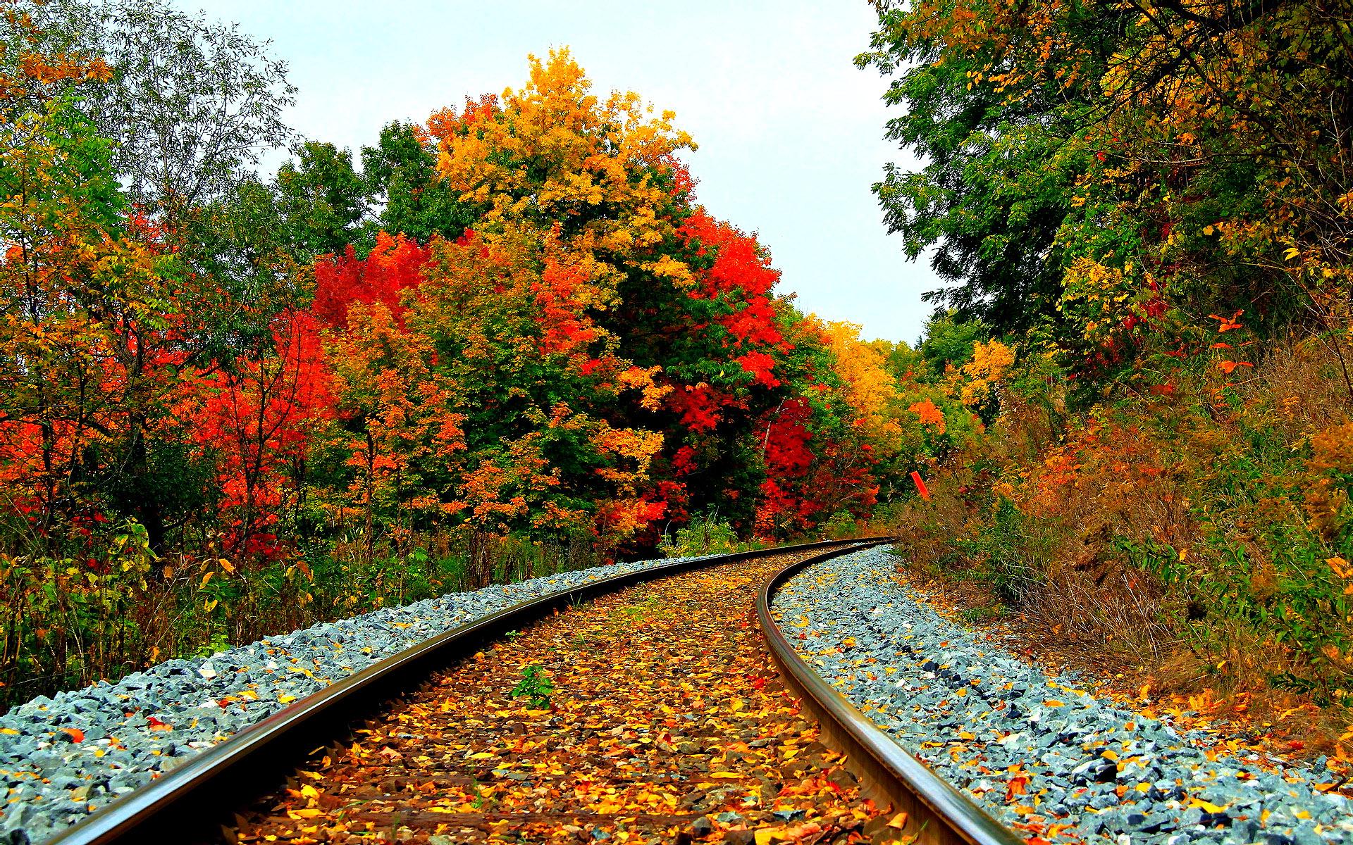 Железная дорога, лес, природа, обои hd, картинка фон осень
