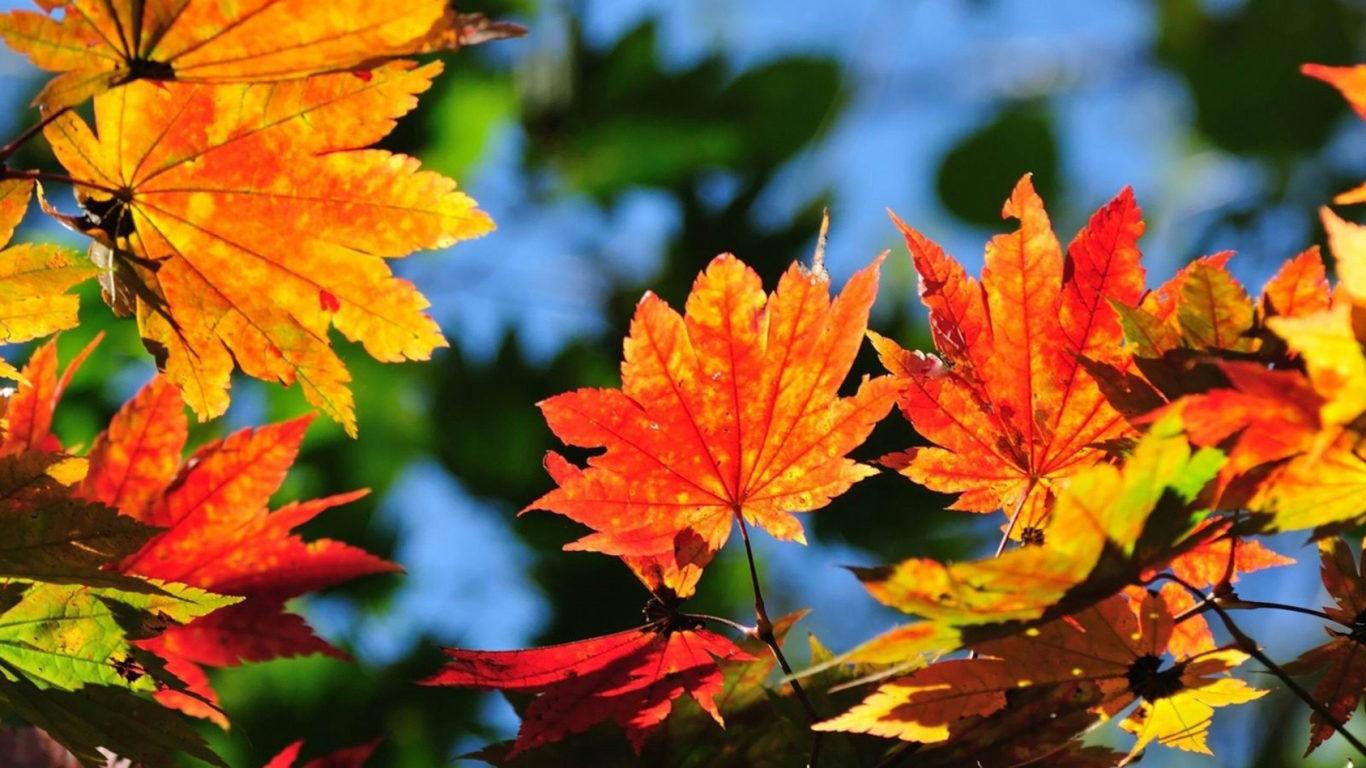 Листья, обои осень, природа, времена года