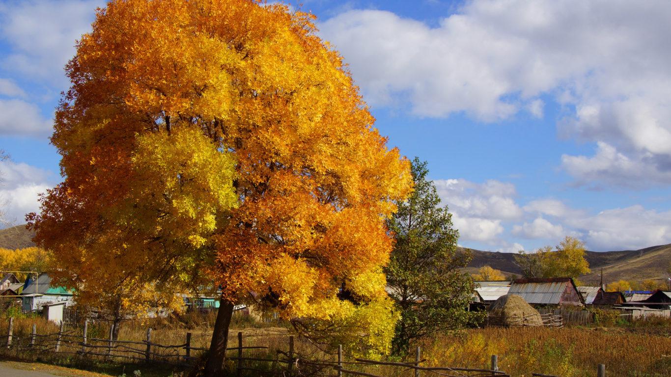 Осень, природа, дерево, 4к обои