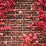 Ветви с красными листьями