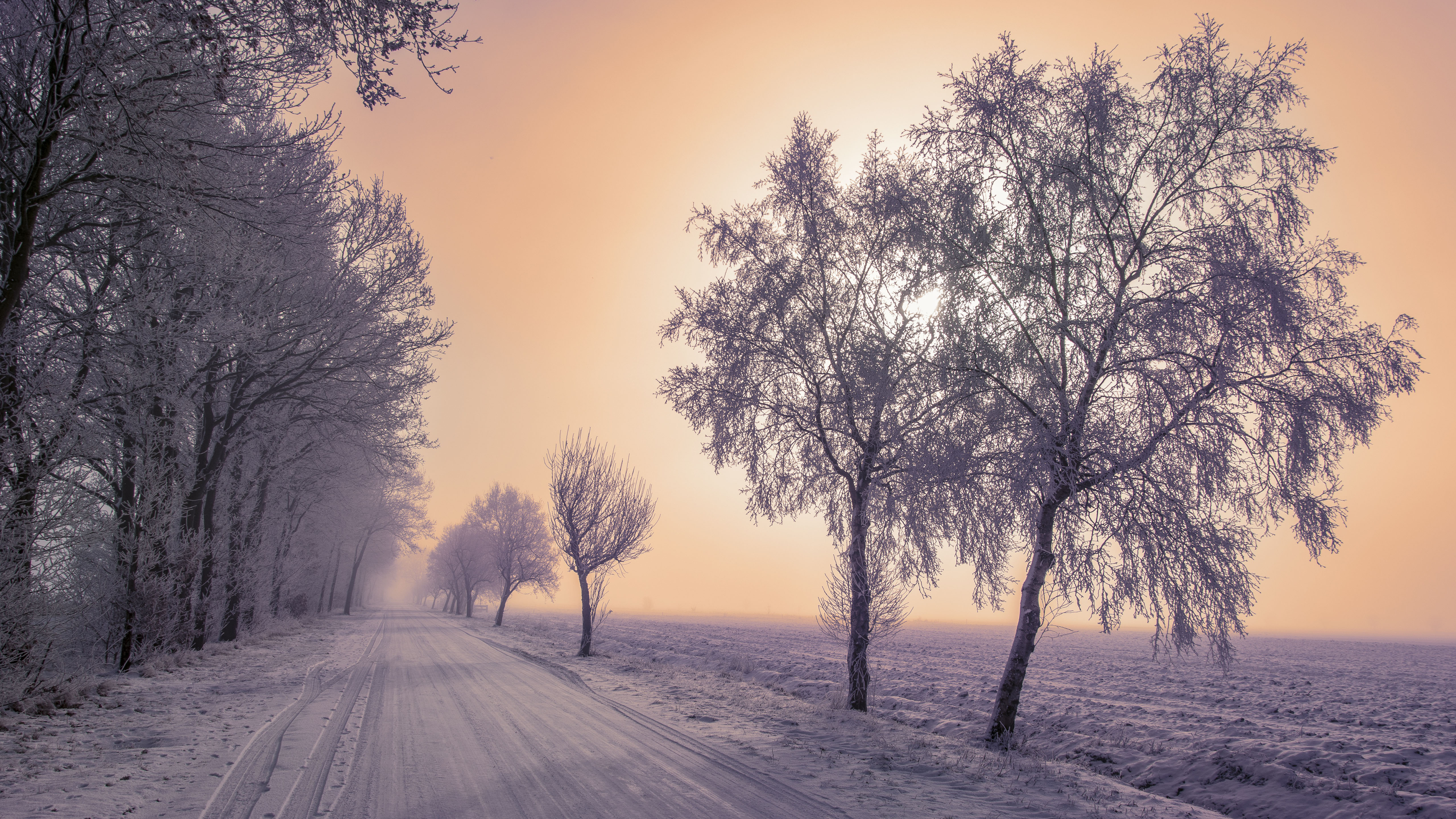 зима, снег, дорога, деревья, природа 5к