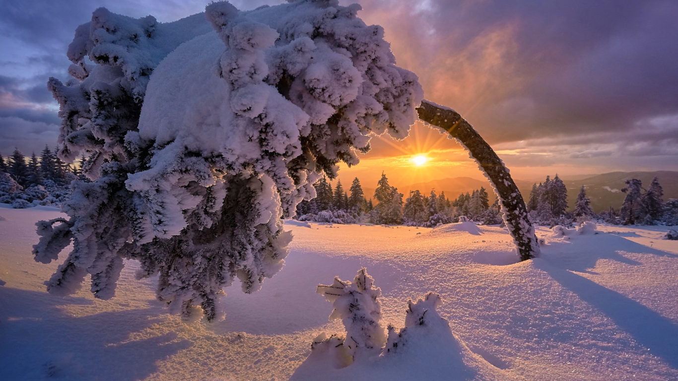 зима, снег, дерево, пейзаж, hd, snow covered tree