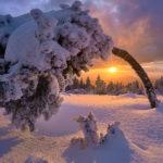 Дерево покрытое снегом