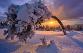 зима, снег, дерево, пейзаж, hd