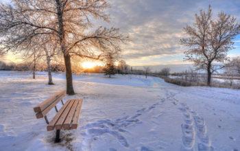 зима, снег, дерево, холод, мороз, следы, 4k