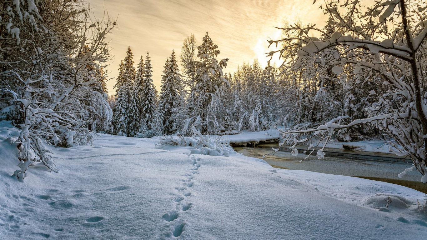 зима, лес, снег, природа, hd обои