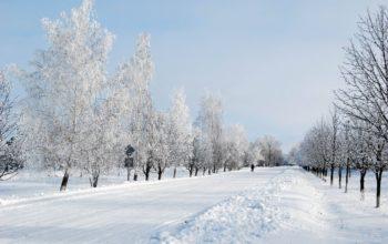 зима, снег, дорога, деревья