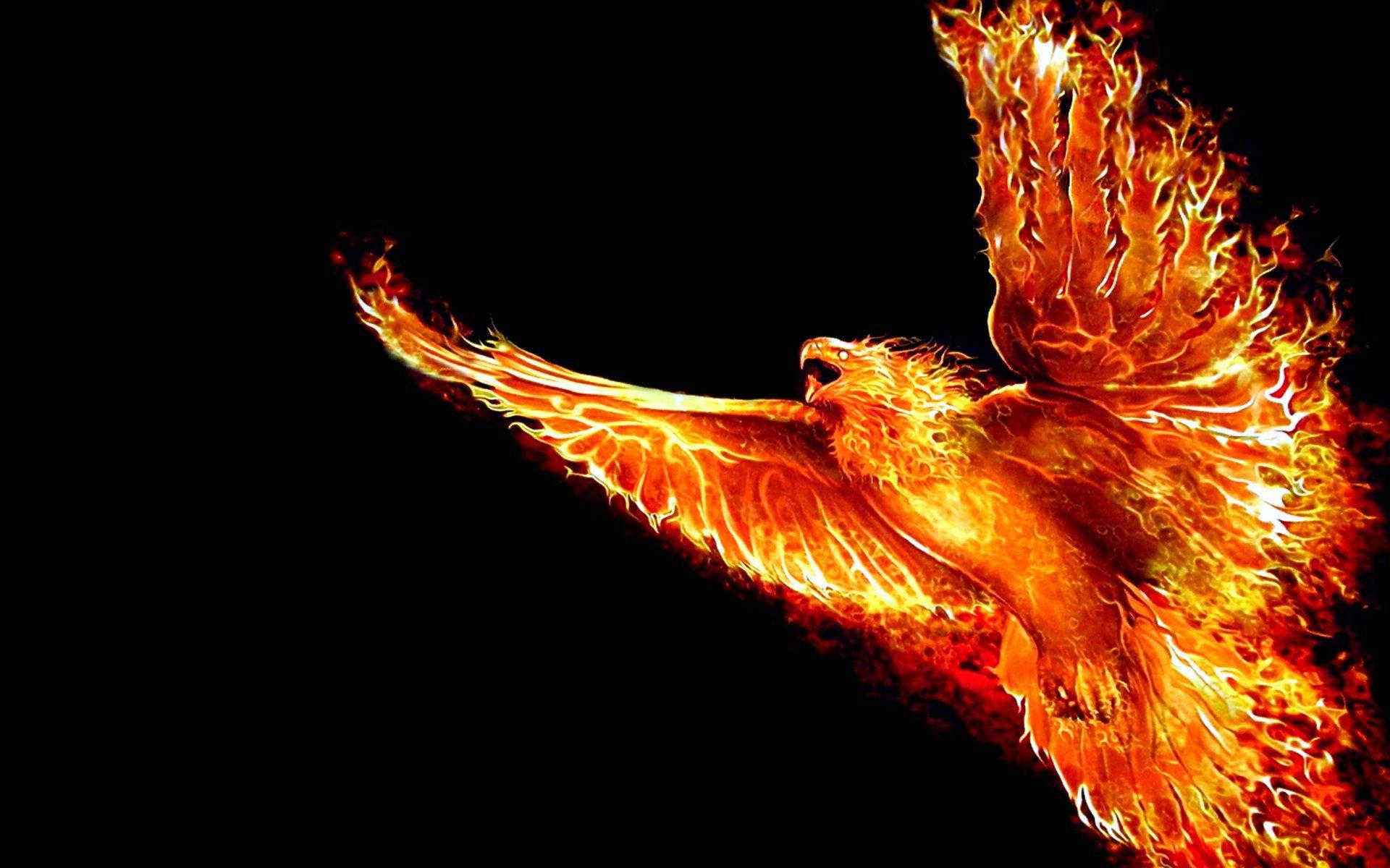 3д обои, Феникс, птица огненная, hd