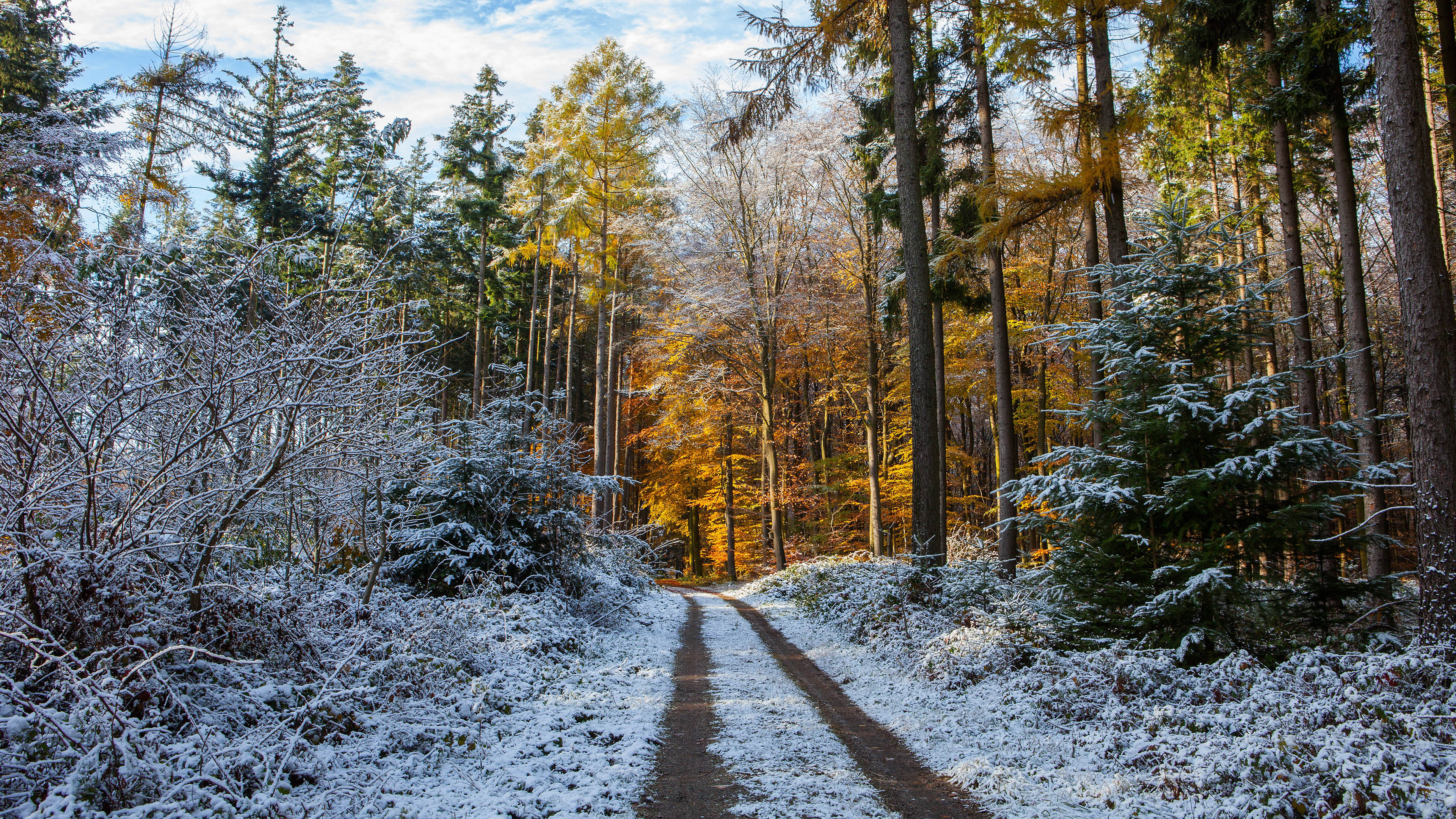 зима, первый снег, лес, природа, елки, сосны, 4к обои