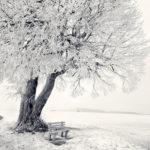 Пушистое дерево покрытое снегом